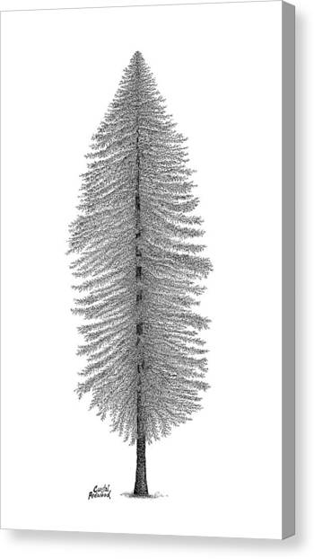 Coastal Redwood Canvas Print