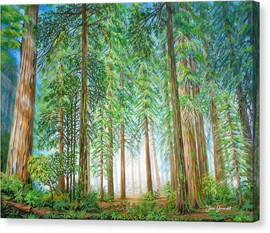 Coastal Redwoods Canvas Print