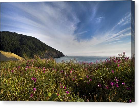 Ocean Sunrises Canvas Print - Coastal Wildflowers Of Oregon by Debra and Dave Vanderlaan