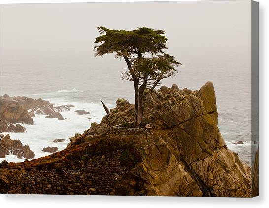 Coastline Cypress Canvas Print
