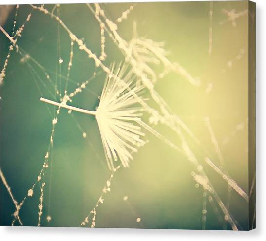 Canvas Print featuring the photograph Cobweb Dandelion Seed by Candice Trimble