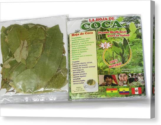 Amazon Rainforest Canvas Print - Coca Leaves From Peru by Dr Morley Read