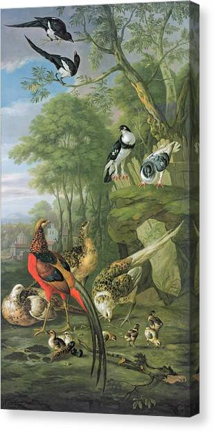 Magpies Canvas Print - Cock Pheasant Hen Pheasant And Chicks And Other Birds In A Classical Landscape by Pieter Casteels