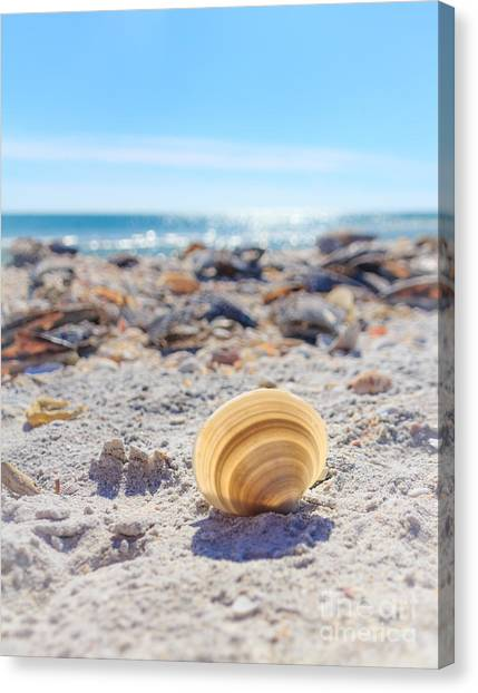 Cockle Shell Summer At Sanibel Canvas Print