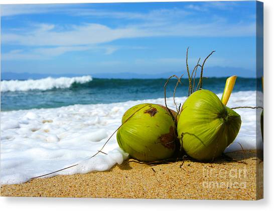 Coconut Canvas Print - Coconut by Aged Pixel