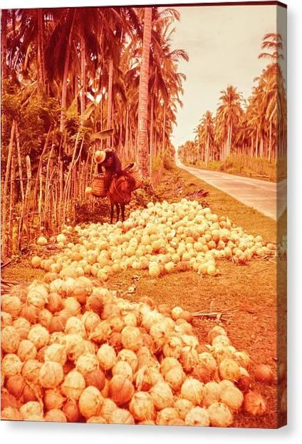 Coconut Harvest Beside Main Highway Canvas Print