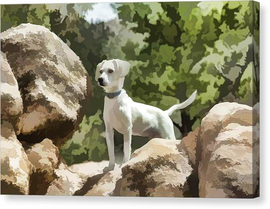 Cody On The Rocks Canvas Print