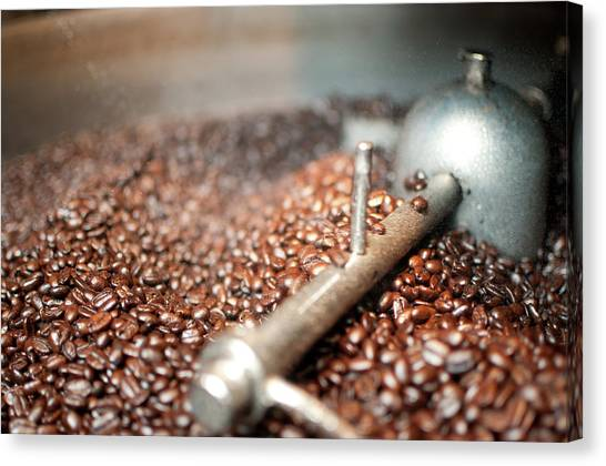 Coffee Beans Being Cooled After Roasting Canvas Print