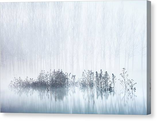 Swamps Canvas Print - Cold & Foggy Morning In The Swamp by David Frutos