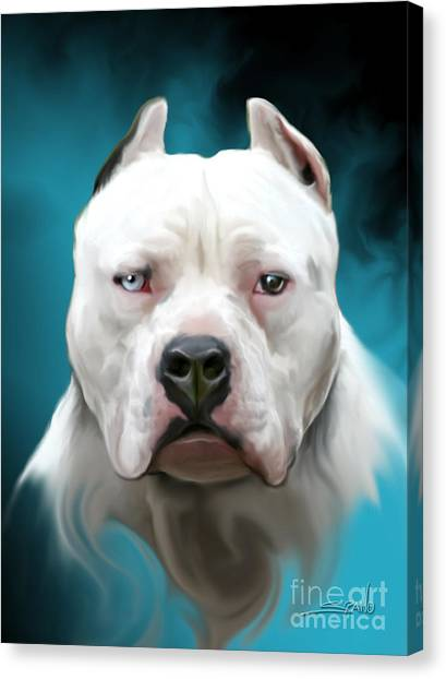 Cold As Ice- Pit Bull By Spano Canvas Print