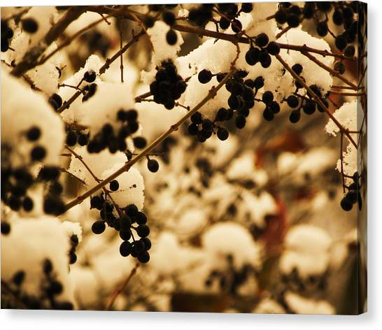 Cold Berries Canvas Print by Christian Rooney
