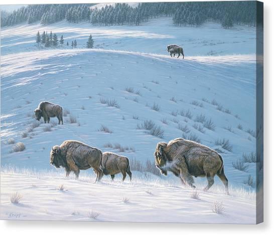 Buffaloes Canvas Print - Cold Day At Lamar by Paul Krapf