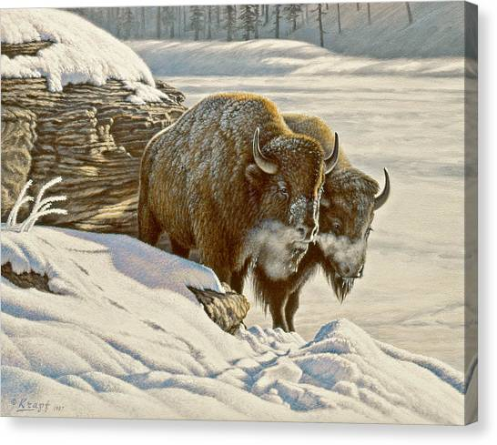 Buffaloes Canvas Print - 'cold Day At Soda Butte' by Paul Krapf