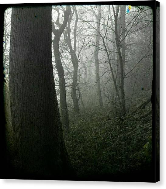 Foggy Forests Canvas Print - Cold Fog by Alexandra Cook
