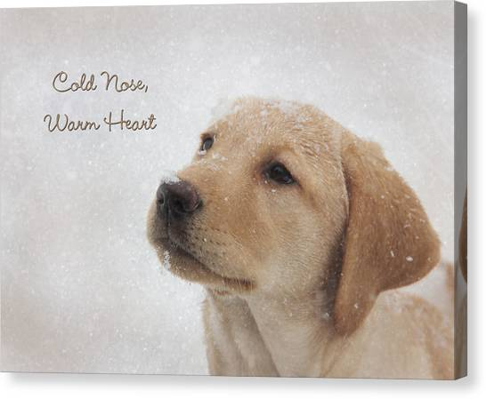 Yellow Lab Canvas Print - Cold Nose Warm Heart by Lori Deiter