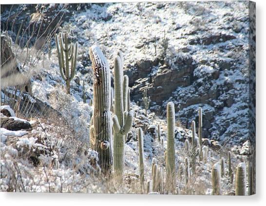 Cold Saguaros Canvas Print
