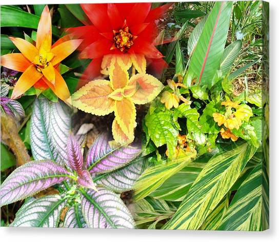 Collage Of Tropical Colors Canvas Print by Van Ness