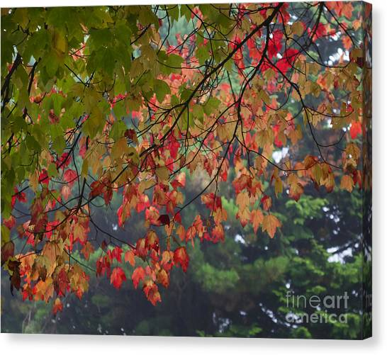 Collection Of Colour In The Morning Fog Canvas Print