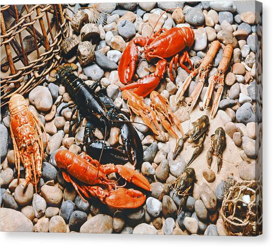 Crabbing Canvas Print - Collection Of Shellfish by English School