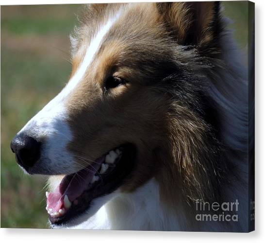 Collie At The Ashokan Canvas Print