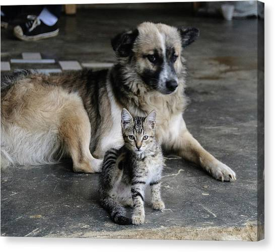Colombia, Minca Kitten And Dog Canvas Print by Matt Freedman