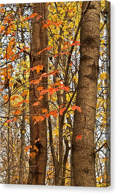 Color And Trees Lan 225 Canvas Print