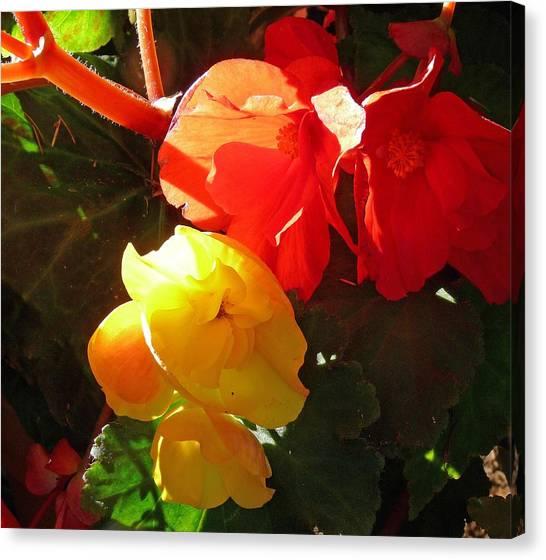 Color Burst Canvas Print by Gracia  Molloy