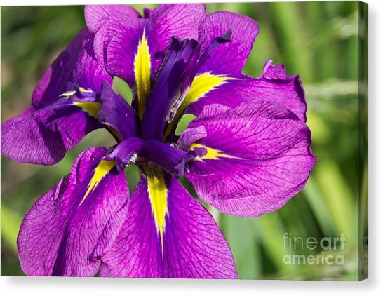 Color Explosion All Profits Go To Hospice Of The Calumet Area Canvas Print