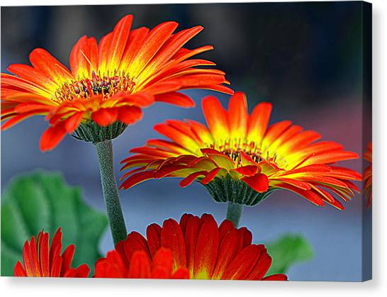 Color Me Happy......... Canvas Print