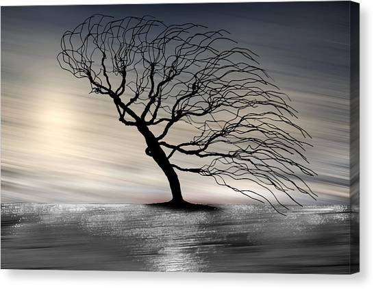 Color Of The Wind Canvas Print