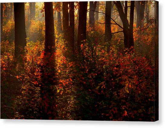 Color On The Forest Floor Canvas Print