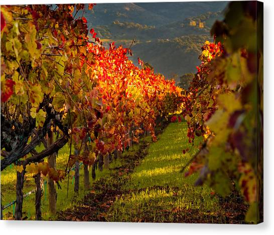 Wine Country Canvas Print - Color On The Vine by Bill Gallagher