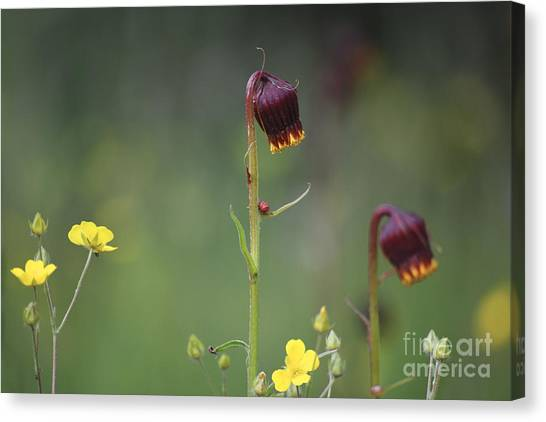 Canvas Print featuring the photograph Colorado Wildflowers by Kate Avery