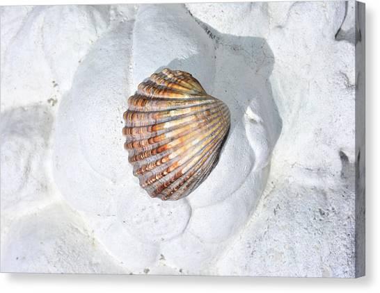Colored Seashell  Canvas Print