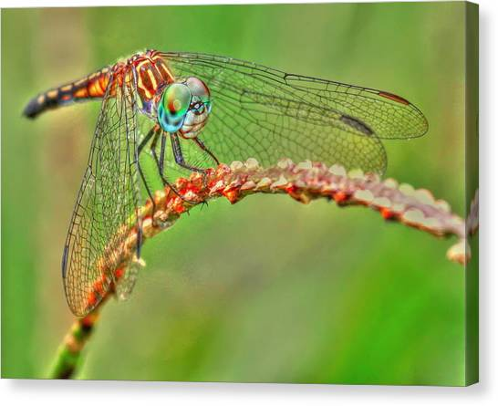 Colorful Dragonfly Canvas Print