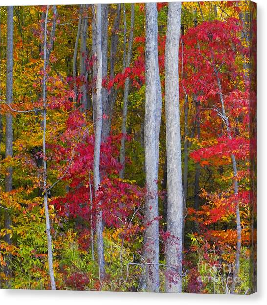 Colorful Fall Forest Canvas Print by Scott Cameron