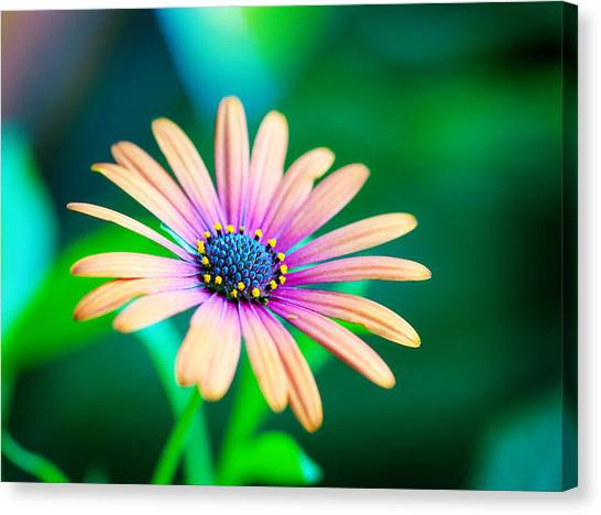 Colorful Flower Canvas Print by Tammy Smith