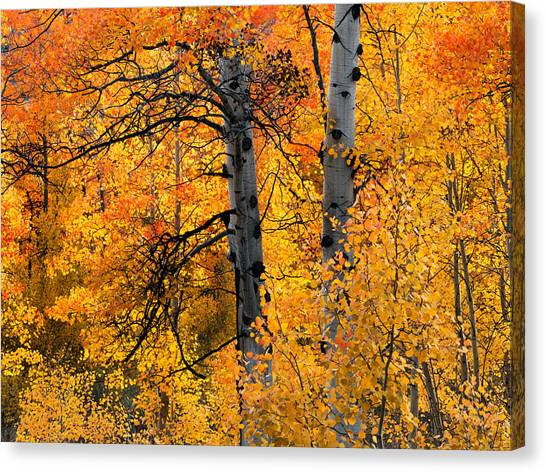 Colorful Glow Canvas Print by Leland D Howard