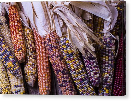Indian Corn Canvas Print - Colorful Indian Corn by Garry Gay