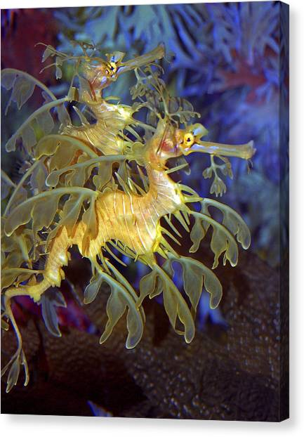 Blue Camo Canvas Print - Colorful Leafy Sea Dragons by Donna Proctor