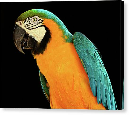 Colorful Macaw Bird Canvas Print by Jeff R Clow