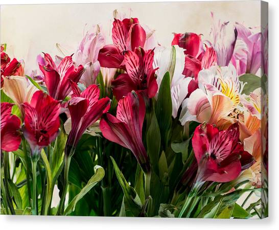 Colorful Peruvian Lillys Canvas Print