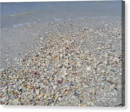 Colorful Shells At The Water's Edge Canvas Print