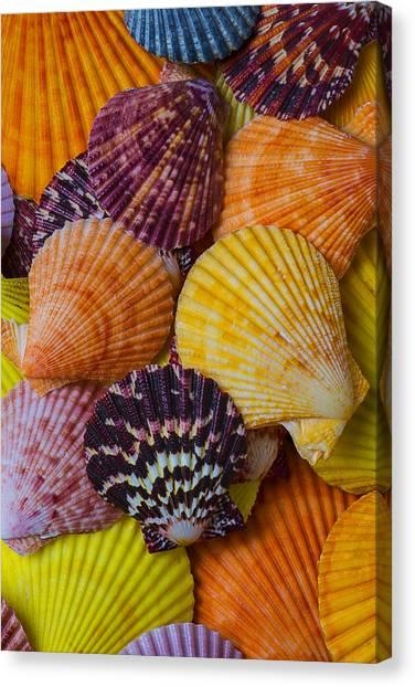 Seashell Fine Art Canvas Print - Colorful Shells by Garry Gay