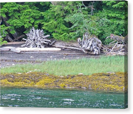 Colors Of Alaska - Layers Of Greens Canvas Print