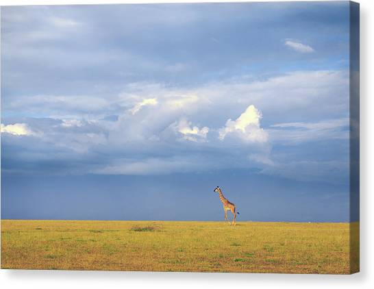 Colors Of Freedom Canvas Print by Eiji Itoyama