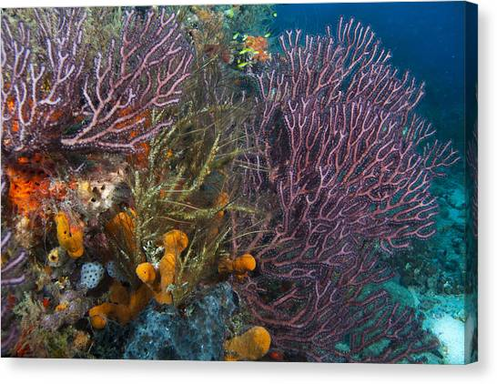 Colors Of Reefs Canvas Print
