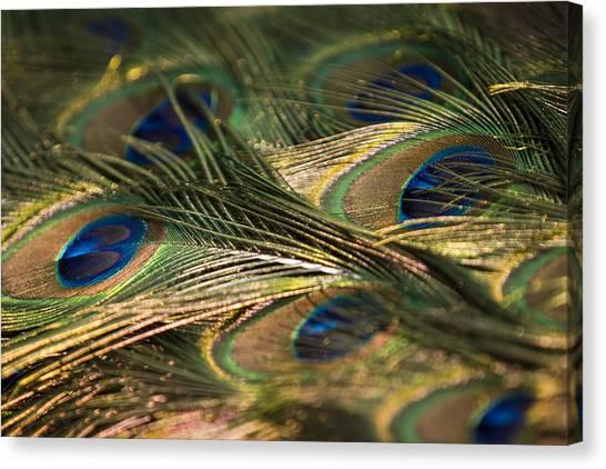 Colour And Design Canvas Print