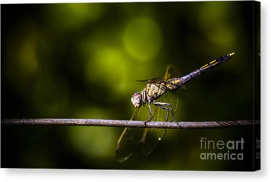 Dragonfly Canvas Prints Page 6 Of 611