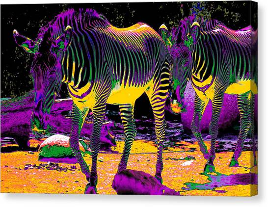 Colourful Zebras  Canvas Print